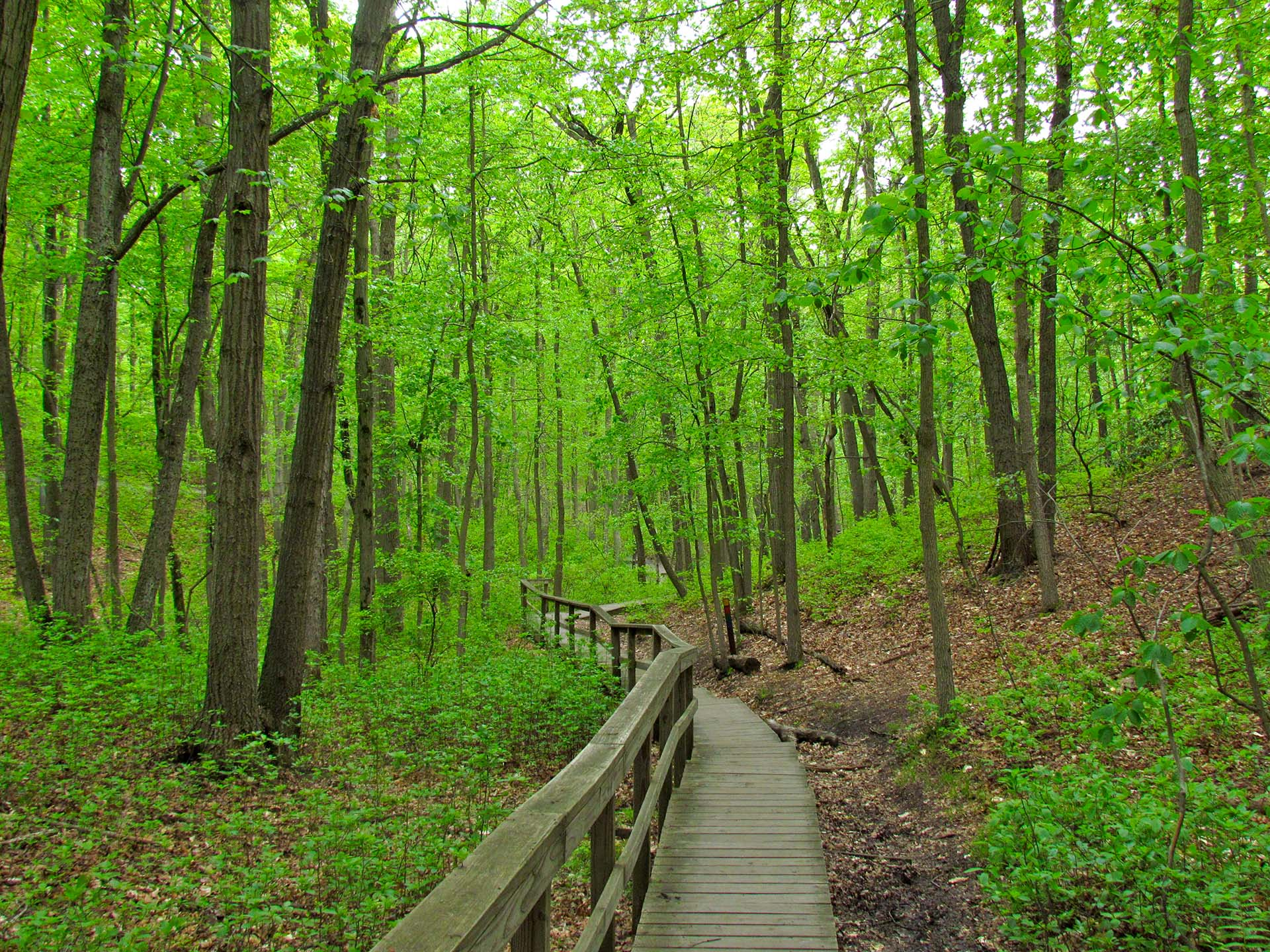 A hiking trail through the woods.